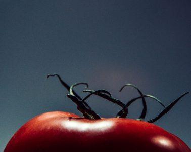 night-tomato